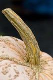 De Kromme van de pompoen Royalty-vrije Stock Afbeelding