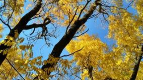 De kronen van de de herfstboom tegen de blauwe hemel in duidelijke zonnige dag-2 Stock Fotografie