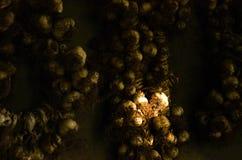 De kronen van knoflook hangen op de concrete muur stock foto's