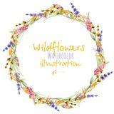 De kroon, de grens van het cirkelkader met gele droge wildflowers, lupine en de lavendel bloeien stock illustratie
