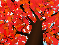 De kroon van de herfst van een boom Stock Afbeeldingen