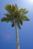 De kroon van de palmen tegen de hemel Stock Foto's