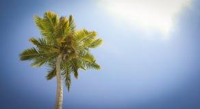 De kroon van de palmen tegen de hemel Stock Afbeelding