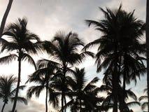 De kroon van de palmen tegen de hemel Royalty-vrije Stock Fotografie