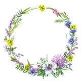 De Kroon van de zomerwildflowers royalty-vrije illustratie