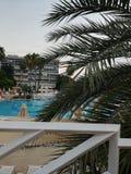 De kroon van palmen op de achtergrond van de pool royalty-vrije stock foto
