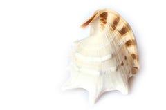 De Kroonslak van de Objecten van het strand stock afbeelding