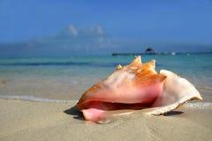 De Kroonslak van het strand Stock Foto's