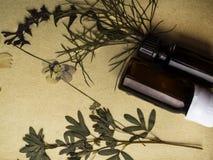 De kruiden aromatherapy geneeskunde, Wijnoogst stileerde foto van droge kruidbloemen, en olieflessen stock afbeeldingen