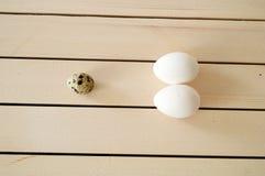 De kruiden en de installaties in de kippeneieren, het kippennest en de eieren, beelden van de eieren in de kwartels ` s nestelen, Stock Foto's