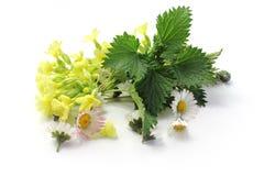 De kruiden van de de lentemengeling Stock Afbeelding