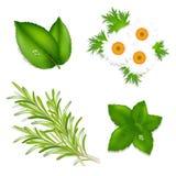 De Kruiden van het aroma Stock Afbeeldingen