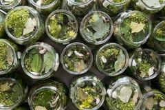 De kruiden van het komkommerswater Royalty-vrije Stock Fotografie