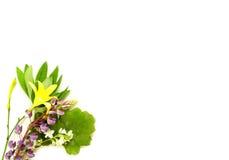 De kruidenbloemen van de zonnestilstandmidzomer Stock Foto's