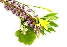 De kruidenbloemen van de zonnestilstandmidzomer Royalty-vrije Stock Afbeeldingen