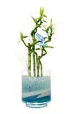 De kruik van het glas met bamboe Royalty-vrije Stock Foto's