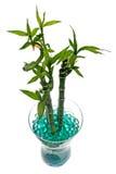 De kruik van het glas met bamboe Royalty-vrije Stock Fotografie