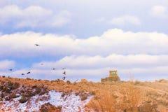 De kruippakjetractor richt het terrein tegen de achtergrond van wolken op vliegende vogels royalty-vrije stock foto's