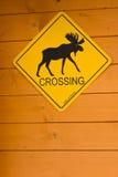 De Kruising van Amerikaanse elanden royalty-vrije stock foto's