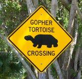 De kruising van de schildpad Stock Afbeeldingen