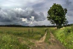 De kruising van de weide onder onweerswolken met een grote boom op de houtachtergrond Stock Foto