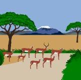 De kudde van de impala Stock Foto