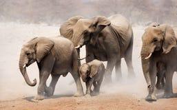 De kudde van de olifant Stock Afbeelding