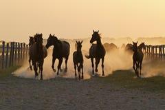 De kudde van de tijd van de paardavond in de stralen van een roepende zon royalty-vrije stock fotografie