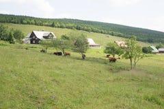 De kudde van hefbomen in het bergdorp stock afbeeldingen