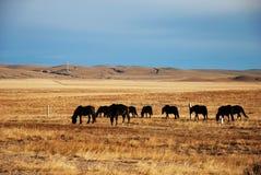 De kudde van het paard royalty-vrije stock foto's