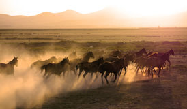 De kudde van paard loopt Stock Foto
