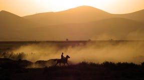 De kudde van paard loopt Stock Afbeeldingen