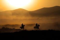 De kudde van paard loopt Royalty-vrije Stock Fotografie