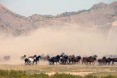 De kudde van paard loopt Royalty-vrije Stock Afbeeldingen