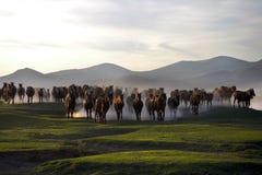 De kudde van paard loopt Stock Afbeelding