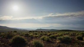 De kudde van paarden in de bergen Paarden die in de weide tegen de blauwe hemel weiden stock foto's