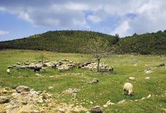 De kudde van schapen royalty-vrije stock foto