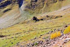 De Kudde van schapen Stock Foto's