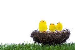 De kuikens die van de baby in nest zitten stock foto's