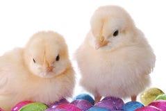 De Kuikens van de baby en de Eieren van het Suikergoed Royalty-vrije Stock Fotografie
