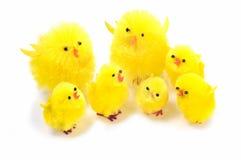 De kuikens van Pasen Stock Afbeelding