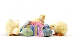 De Kuikens van Pasen stock foto's