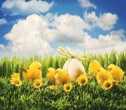 De kuikens van Pasen in het gras Stock Foto