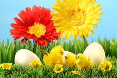 De kuikens van Pasen in het gras stock afbeelding