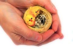 De kuikens van weinig Pasen Stock Foto's