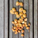 De kuilen van de abrikoos op hout stock afbeelding