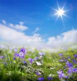 De kunst bloemenlente of de zomerachtergrond Royalty-vrije Stock Foto's
