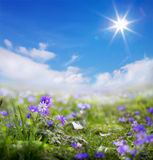De kunst bloemenlente of de zomerachtergrond Royalty-vrije Stock Afbeelding