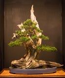 De Kunst van Bonsai Royalty-vrije Stock Foto