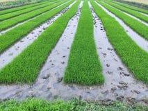 De kunst van landbouwgrond royalty-vrije stock foto's